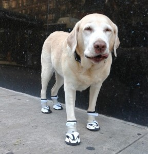 Dog Shoes and Boots Types, Sizes, Cost