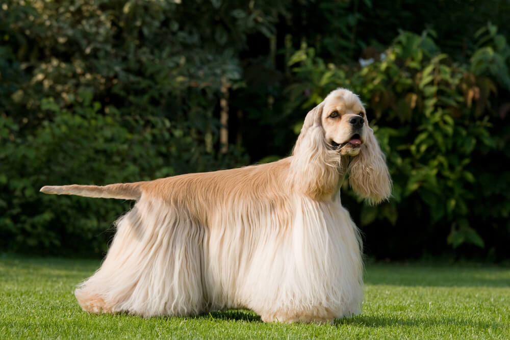 The 10 Stinkiest Dog Breeds