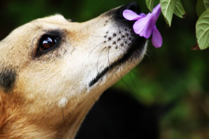 The 15 Dog breeds with best sense of smell