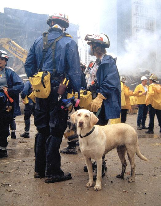 THEA - this photo (c) by Dog Heroes of September 11th. Kennel Club Books
