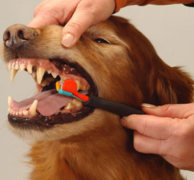 DOG AND PUPPY TEETH TOOTH CLEAN/BRUSH, DOG TOOTHPASTE
