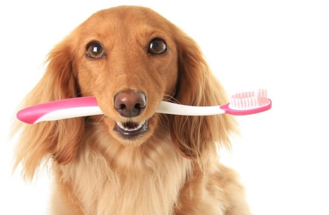 BEST DOG AND PUPPY TEETH CLEANING REMEDIES and PRODUCTS