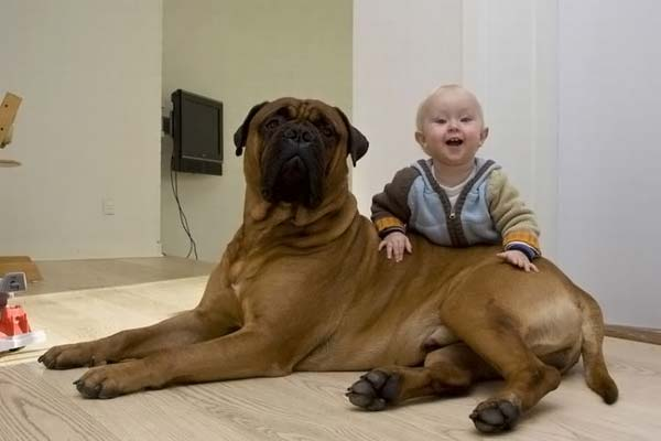 DOG AND KID