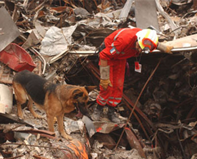 A member of the French Urban Search and Rescue Task Force works with his Alsatian to uncover victims at the site of the collapsed World Trade Center.Photo courtesy FEMA, photograph by Andrea Booher