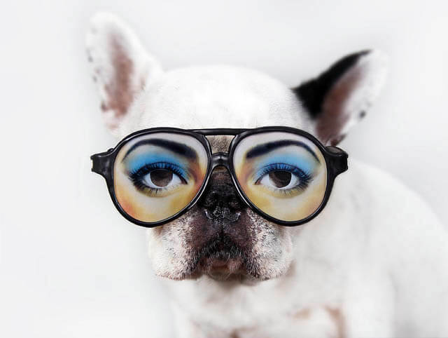 Glasses for Dog and Puppy
