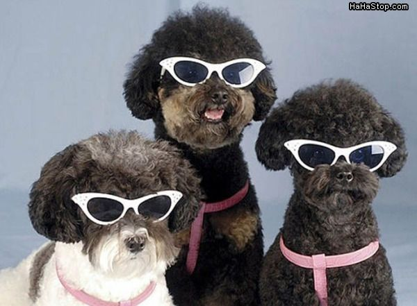 Glasses For Dogs