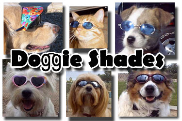 Dog Glasses - Doggles