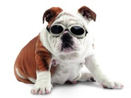 Dog Glasses, Doggles