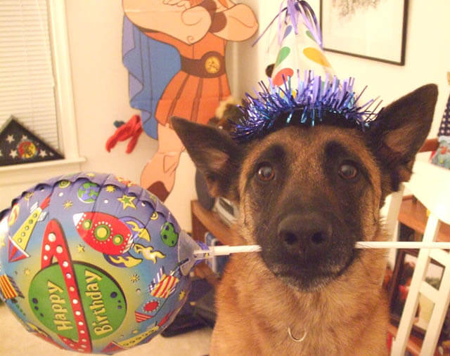 DOG BIRTHDAY PARTY SAFETY TIPS