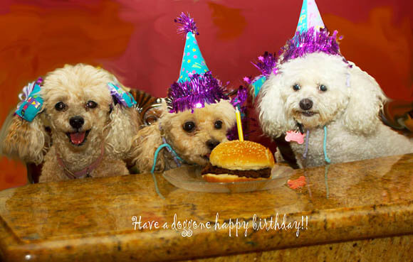 DOG PUPPY BIRTHDAY PARTY