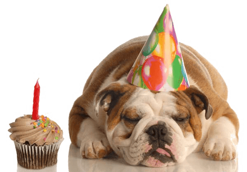 DOG BIRTHDAY CELEBRATION WAYS