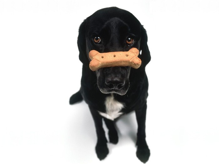 Dog Bone Types: Edible, Raw, Treats