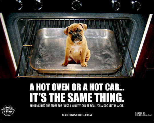 WARNING!!! CAR IS AN OVEN! OVERHEATED DOGS, TIPS, INFORMATION