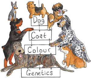 DOG COLOR