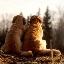 DOG and PUPPY LOVE