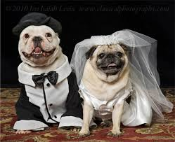 DOG and PUPPY LOVE, WEDDING and MARRIAGE