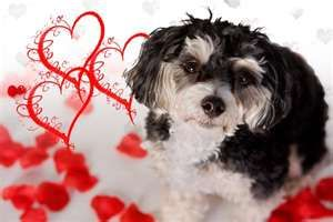 VALENTINE DOG and PUPPY CARDS and GIFTS, LOVE, WEDDING and MARRIAGE