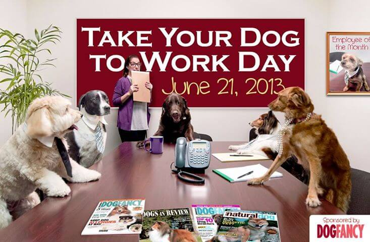 Dog Work, Career, Rescue Dogs