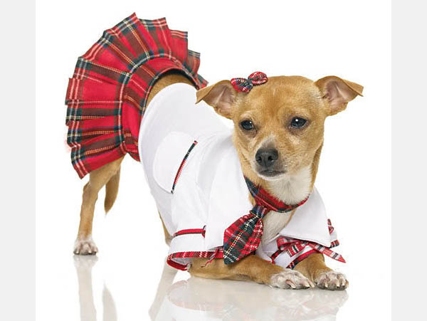 DOG APPAREL DRESS CLOTHES