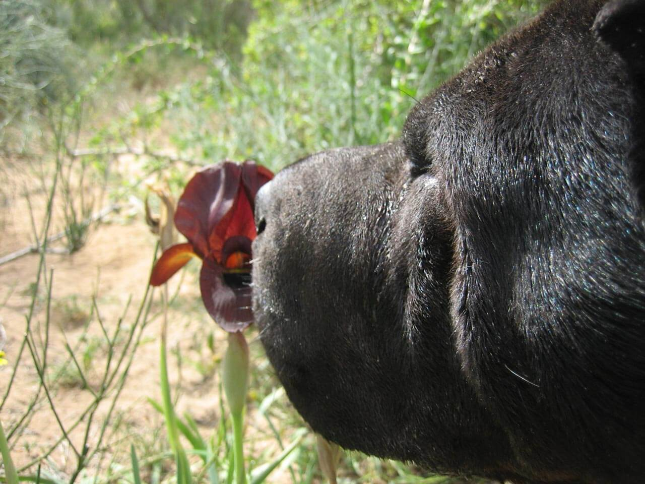 WAYS TO KNOW WHEN DOG'S NOSE NEEDS CARE & ATTENTION
