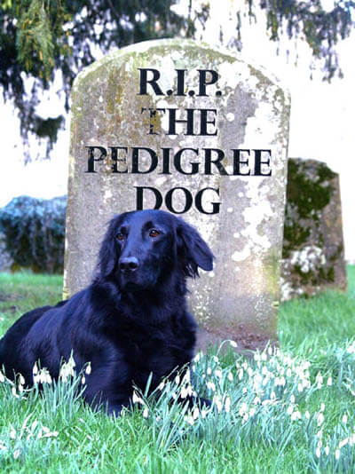 DOG DEATH, R.I.P, Virtual Pet Memorial, Dog loss