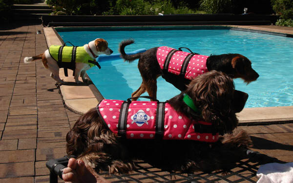 Teach Your Dog and Puppy to Swim!