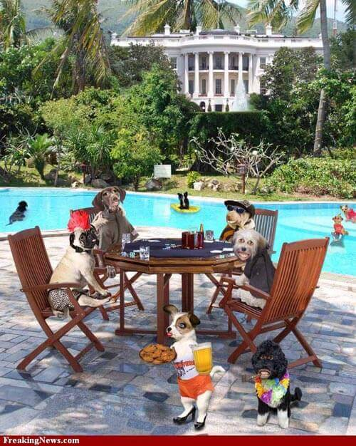 Dog Party Pools