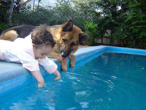 HOW TO CLEAN DOG POOL