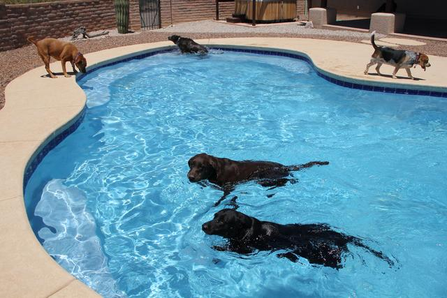 Dog Pools, Dogs and Pools, Dog Pool Rules