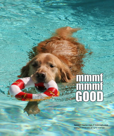 Swimming Pool Dog Safety Tips