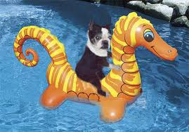 Dog Pool Puppy Toys