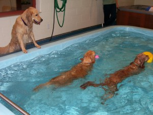 Dog and Puppy in Pools
