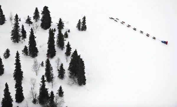 Sledding Dog Race, Sled Dogs, Husky, Malamut, Siberian, Alaskian