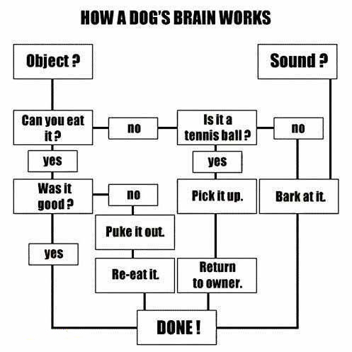 DOG BRAIN STRUCTURE