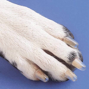 Dog Nails, Claws, Trimming and Clipping