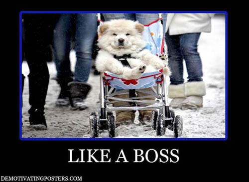 Dog demotivators and graphics