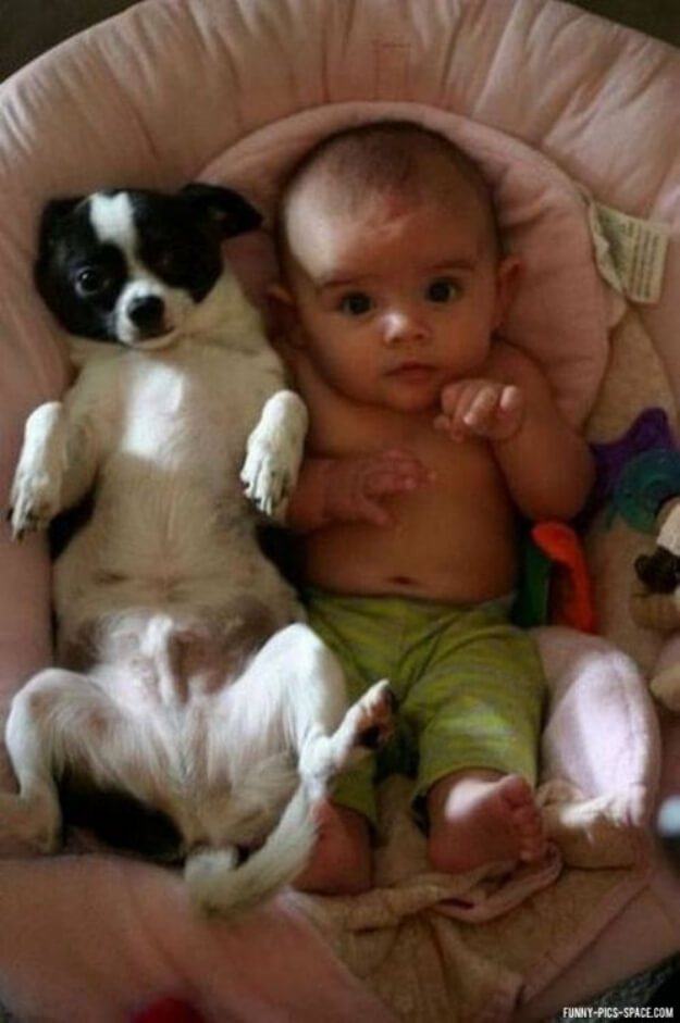 Funny Dogs and kids, puppies and children