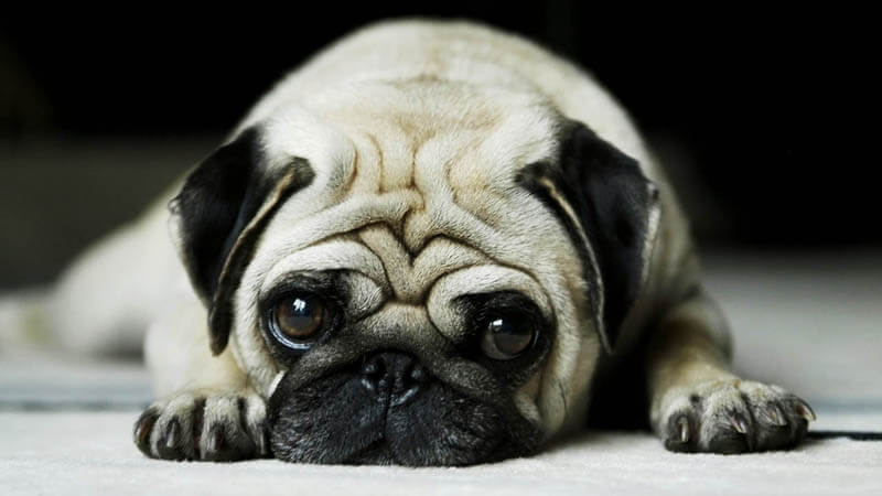 Famous and funny dog phrases, idioms, expressions, words