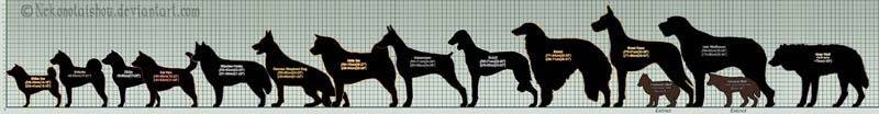 DOG SIZE INFOGRAM, INFOGRAPHICS, PUPPY SIZE, DOG BREEDS SIZE CHART, DOG SIZE MEASURE CALCULATOR - PRESS TO SEE IN FULL SIZE