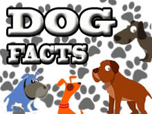 Dog Facts, Stories, Stereotypes