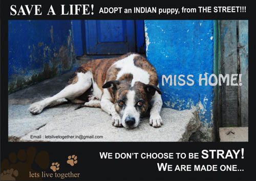 RESCUED DOGS, ADOPT A DOG or A PUPPY!!!