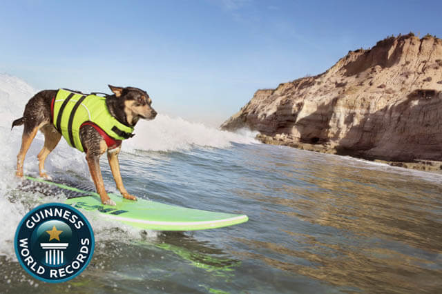 Dog Guinness Book Records and Awards
