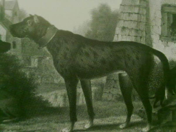 ANCIENT DOG PHOTOS
