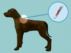 Dog Microchipping, Scanners, Implants, ID