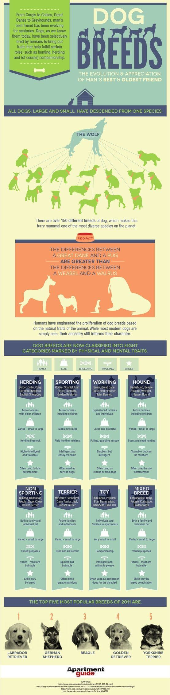 Dog Breeds & Origins