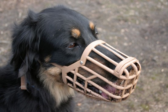Desensitizing Dog Muzzle