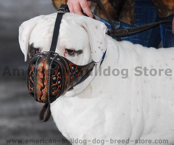 Dog Muzzles Safety