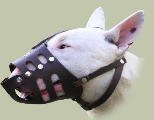How To Wear Dog Muzzle
