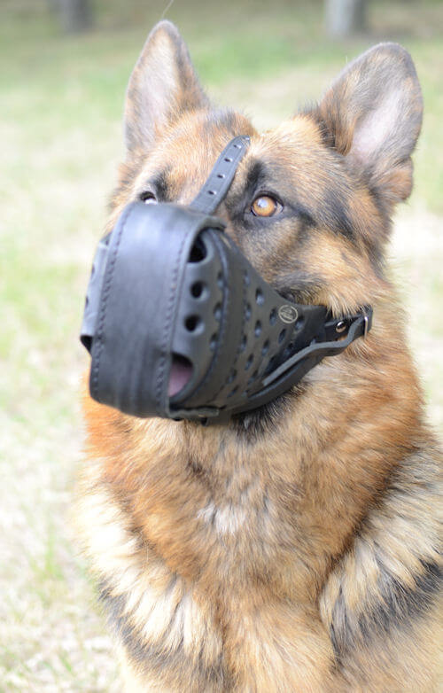 Dog Muzzle Types, Sizes, Uses, Prices - Buy Online Dog Muzzle
