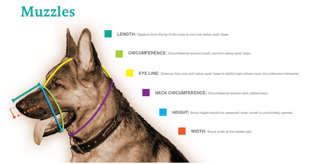 Dog Muzzle Measurements, Charts, How to Measure Dog Muzzle